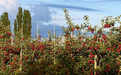 Яблочн сад